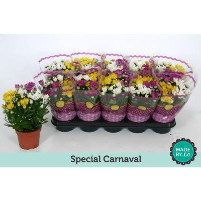 Chrysanthemum Indicum mix per Topf carnaval 080138