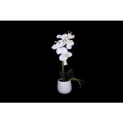 Phalaenopsis x2 31 cm weiss 100948