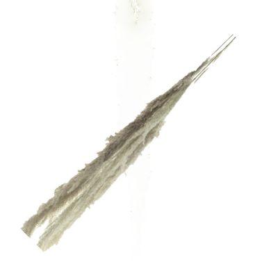Pampaswedel  (3) ca. 110cm, natur 112437