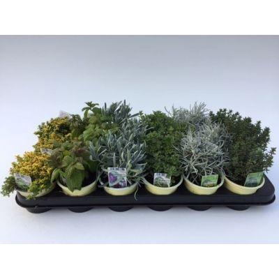 Bio Garten Pflanzen gemischt Gewürze mix 112828