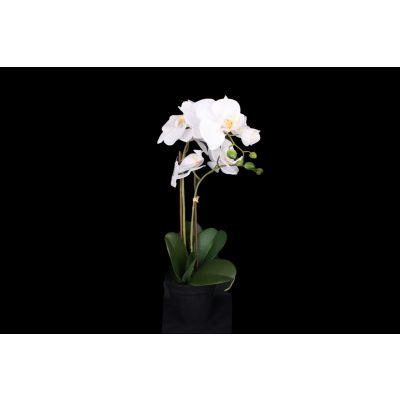 Phalaenopsis  x6 77 cm weiss 116027