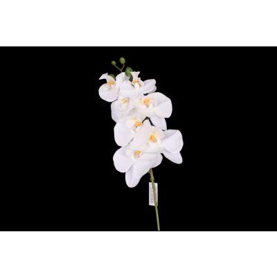 Orchid. Phalaenopsis-Zweig x7 weiss 116028