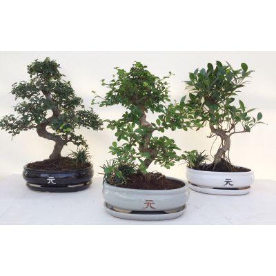 Bonsai 25cm Yuan pot + onderschaal B25-YUAN 117172
