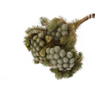 Brunia Albiflora 35-40 cm 75g natural 118956