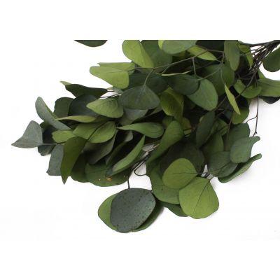Eucalyptus Populus Green 75g natural 118958