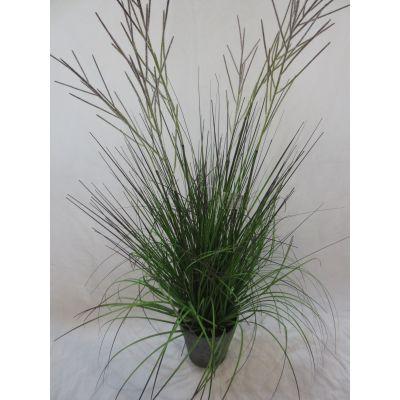 Onion Frucht Gras Deko getopft 86 cm 110260